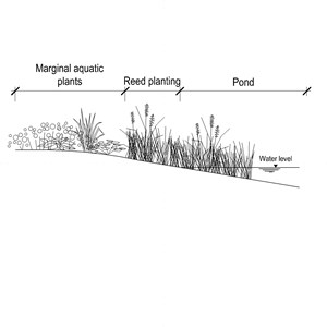 LOD 3 2D Section representation of Marginal planting systems.